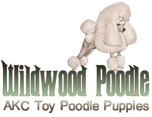 Wildwood Poodle Puppies - Breeder of Toy Poodles located in